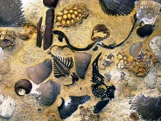life in the oceans of the Ordovician