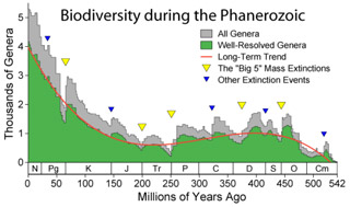 Biodiversity during the Phanerozoic